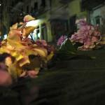 Hydrangeas on an Italian Street