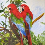 Scarlet Macaws - 2012